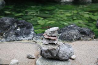 岩の上の蜻蛉の写真・画像素材[2403409]