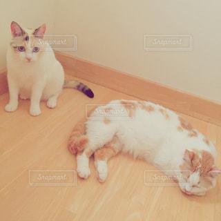 猫2匹の写真・画像素材[2403568]