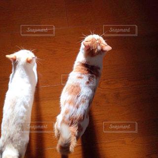 2匹の猫の写真・画像素材[2403602]