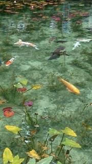 カラフルな魚と葉のコラボレーションの写真・画像素材[2404350]