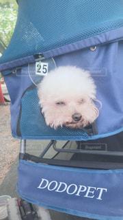 バッグの中の犬の写真・画像素材[2408766]