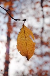 木のクローズアップの写真・画像素材[2410132]