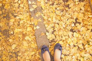 秋の公園で一歩踏み出す女の子の写真・画像素材[2409744]