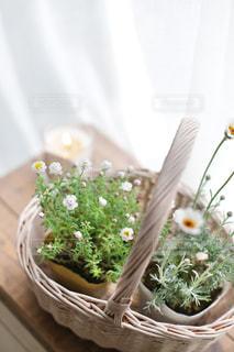 窓辺にあるカゴに生けた草花の写真・画像素材[2413129]