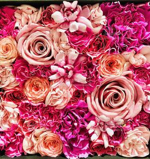 花の写真・画像素材[3305021]