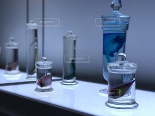 透明標本 part2の写真・画像素材[2408013]
