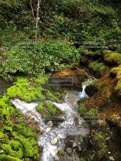 茶蕾苔の写真・画像素材[2608679]