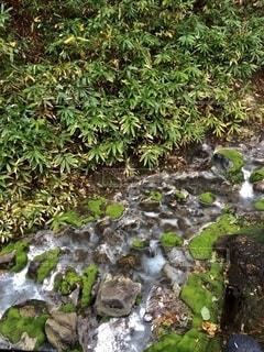 茶蕾苔の写真・画像素材[2608681]