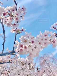 ピンクと水色の写真・画像素材[3071692]