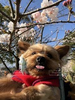 犬がぶら下がっているの写真・画像素材[2409040]