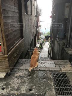 歩道を歩いている猫の写真・画像素材[2420367]