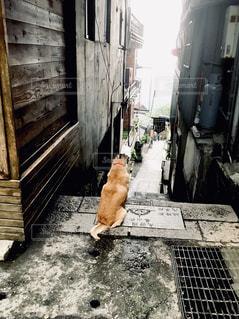 歩道を歩いている猫の写真・画像素材[2420776]