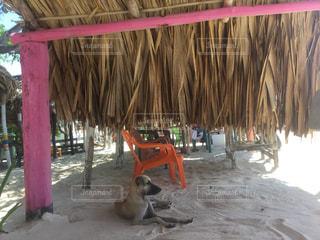 砂の中に座っている犬の写真・画像素材[2414644]
