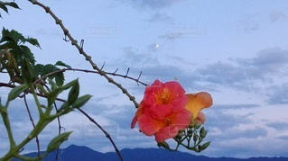 月夜に浮かぶ南国の花の写真・画像素材[2414203]
