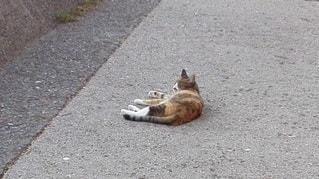 横たわる猫の写真・画像素材[2414227]