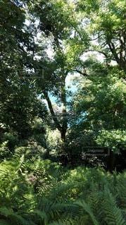 鹿島の森から見える眺めの写真・画像素材[2415112]