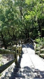 鹿島の森の遊歩道の写真・画像素材[2415116]