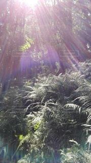 鹿島の森の写真・画像素材[2415122]