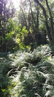 鹿島の森の写真・画像素材[2415129]