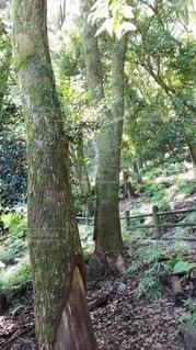 鹿島の森の写真・画像素材[2415130]