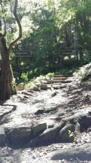 森の小道の写真・画像素材[2415126]
