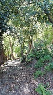 鹿島の森の小道の写真・画像素材[2415128]