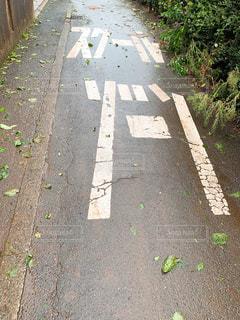 嵐の後の通学路の写真・画像素材[2426239]