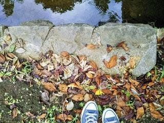 公園の落ち葉の写真・画像素材[2434623]