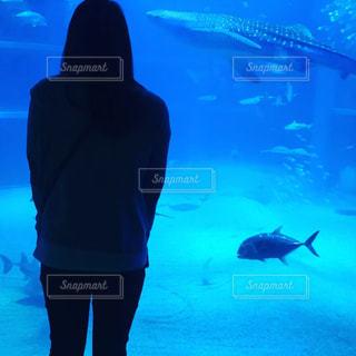 ジンベイザメとわたしの写真・画像素材[2412366]