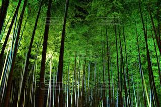 夜の竹林の写真・画像素材[2423090]