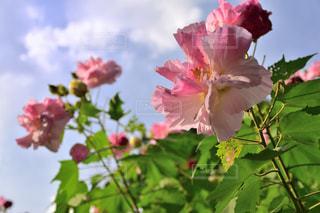 花のクローズアップの写真・画像素材[2497396]
