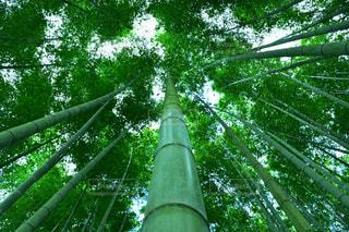 竹林の世界の写真・画像素材[2497398]