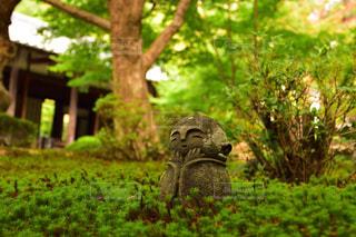 緑豊かな野原に立っているクマの写真・画像素材[2497400]