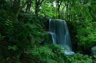 流れゆく滝の写真・画像素材[2497403]