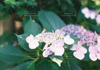 花のクローズアップの写真・画像素材[2413841]