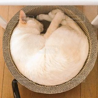うちの猫の写真・画像素材[2414698]