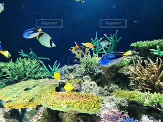 サンゴの水中眺め散歩の写真・画像素材[2414861]