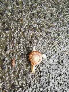 雨の日のでんでん虫の写真・画像素材[2416662]