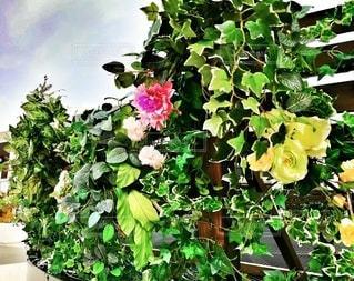 野外の花飾りの写真・画像素材[2869678]