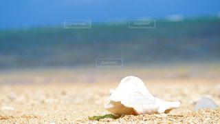 砂浜のクローズアップの写真・画像素材[2438602]