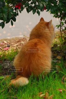 野良ネコの後ろ姿の写真・画像素材[2418862]