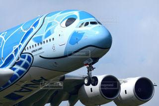 ANA エアバスA380の写真・画像素材[2423186]