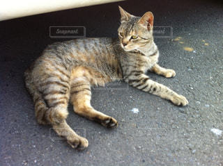 地面に横たわる猫の写真・画像素材[2424429]