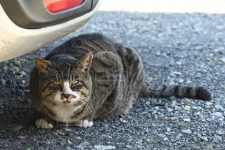 駐車場で休憩中の猫🐱の写真・画像素材[2424439]