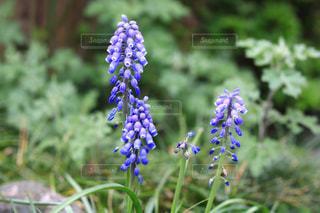 花のクローズアップの写真・画像素材[3082601]