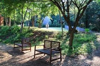 木の隣にある空の公園のベンチの写真・画像素材[4566955]