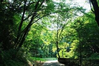 森の中の木の写真・画像素材[4566958]