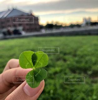 幸せの四つ葉のクローバーの写真・画像素材[2418781]