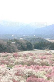 背景に山のある木の写真・画像素材[3314787]