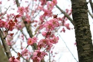 植物の上のピンクの花の写真・画像素材[3314791]
